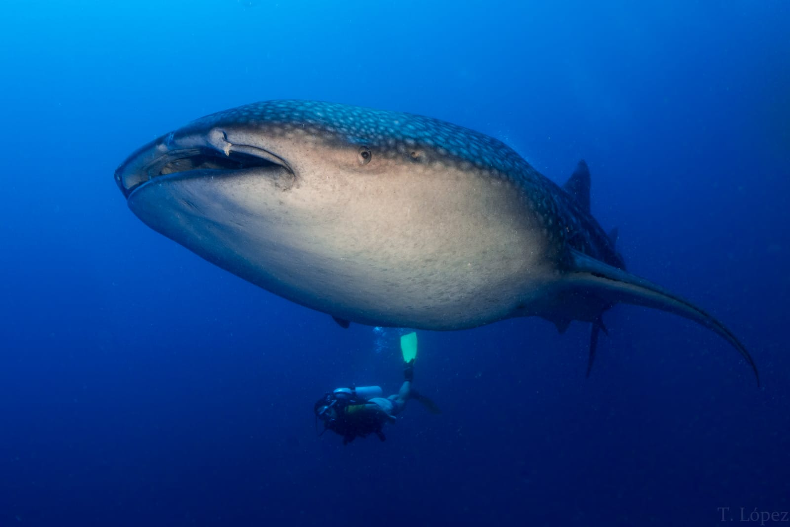 Maldivas-2021